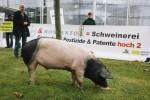 Schweinischer Protest vor Bayer-Konzernzentrale