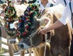 Kuh Bayern Milch Allgäu