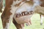Kein Patent auf Leben
