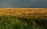 Ein Anbauschwerpunkt der KTG Agrar ist Getreide (Foto: CCO, Pixabay)