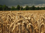 Umwelt und Landwirte sollen von dem Modell gemeinsam profitieren (Foto: CCO, Pixabay)