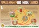 FARMER-MANAGED SEED SYSTEMS