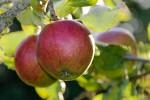 Äpfel aus Hessen statt aus Neuseeland, Foto: flickr, Peter Sieling (CC BY-ND 2.0)