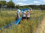 """Forscherinnen spannen Schutznetze über die """"Protected Site"""" in der Schweiz. Foto: Agroscope"""