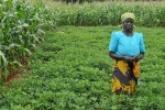 Malawian farmer: Africa could feed itself, Worldbank says