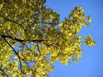 Pappel Baum Bäume