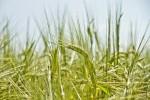 Wie rechtssicher können Öko-Bauern künftig wirtschaften?(Foto: CCO, Pixabay)