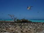 Schutzbedürftige Vogelwelt nahe Hawaii