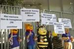 Mexiko: Keine Gentechnik in unserem Honig