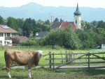 Bayerisches Landidyll
