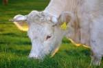 Tierschutzgerechte und flächengebundene Tierhaltung gefordert (Foto: CCO, Pixabay)