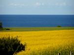 Ostsee Meer Küste Landwirtschaft Raps