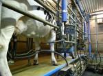 Melken Kuh Milch