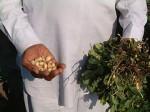 Indien Kleinbauern Saatgut