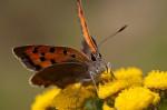 Schmetterling Falter Pollen Insekten