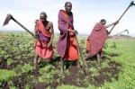 Men cultivating land inTanzania