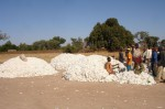 Baumwolle Afrika